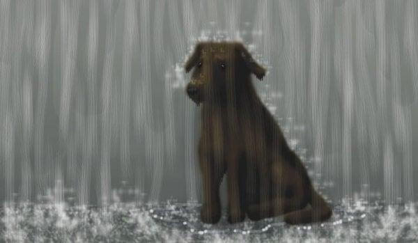 hund i regnet