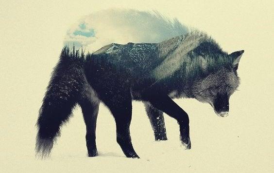 En ulv med et landskap