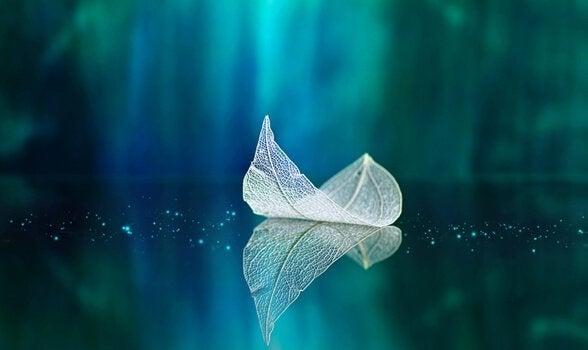 Gjennomsiktig blad som flyter på vann