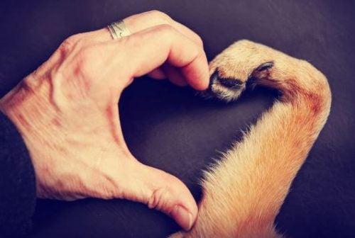 Hundepote og menneskehånd danner et hjerte