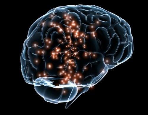 Nevroner i hjernen