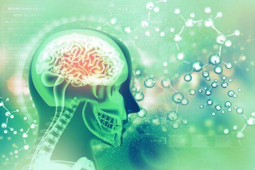 Et bilde av hjernen i neonfarger.