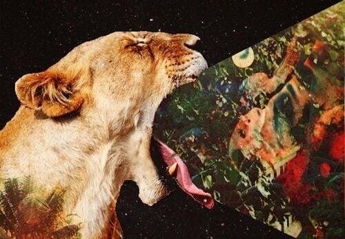 Løve kaster opp bilder etter å ha spist for mange bitre ting