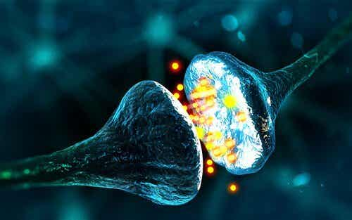 GABA: Nevrotransmitteren for fred og avslapping