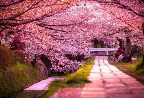 Legenden om Sakura er en fantastisk historie om kraften av kjærlighet.