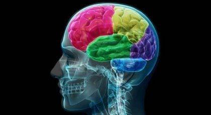 Misbrukerens hjerne: Anatomi av tvang og behov