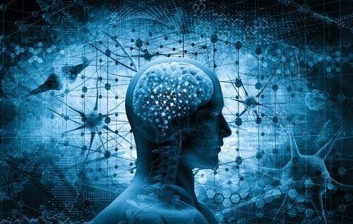 Misbrukerens hjerne
