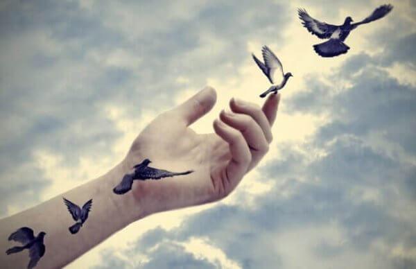 fugler og hånd