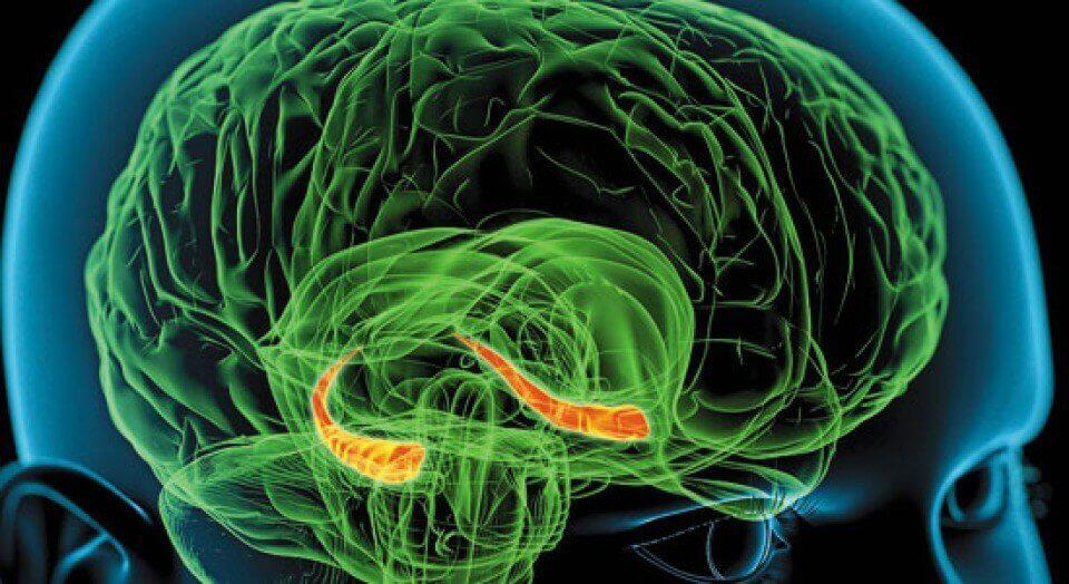 Hippocampus, ansvarlig for hvorfor vi husker noen drømmer