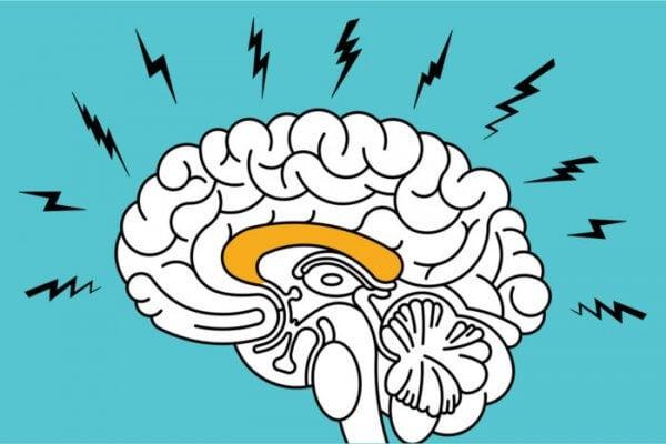 angst i hjernen
