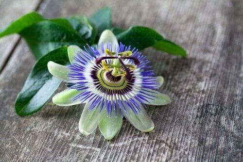 Passion blomst te kan hjelpe bedre søvn