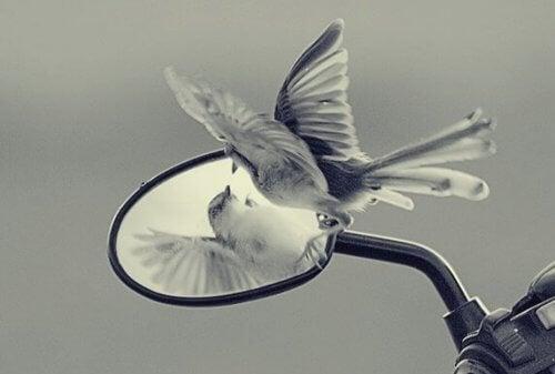 Egoets feller blokkerer vår frihet og personlige vekst