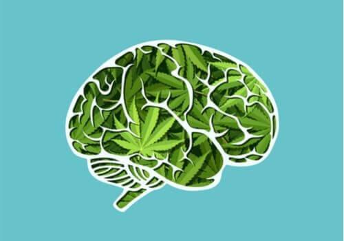 De langsiktige effektene av cannabis på hjernen