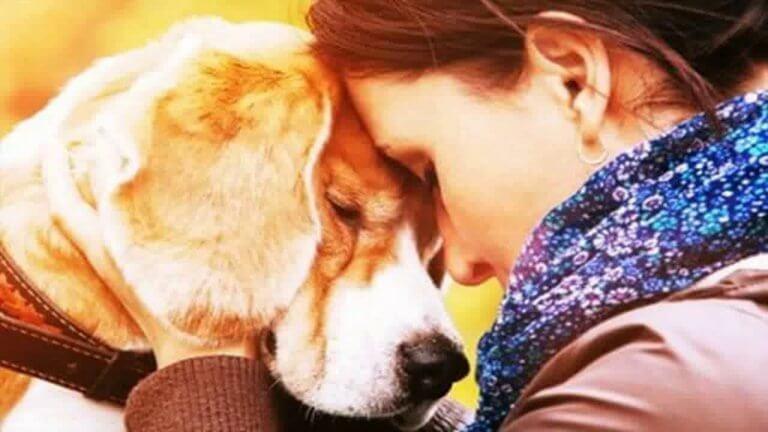 Årsakene til at vi elsker dyrene våre så høyt