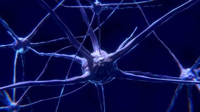 Hva nevroner er og hvordan de fungerer