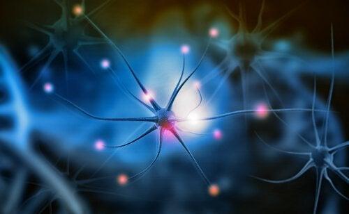 Hva er nevrogenese og hvorfor er det viktig?