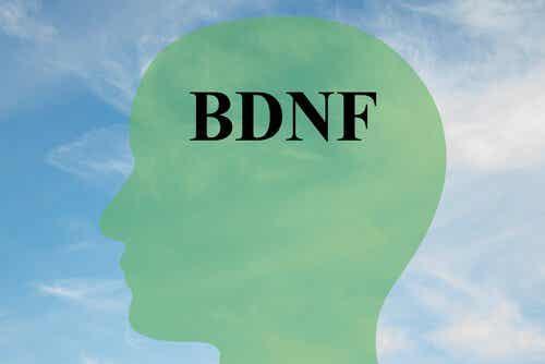 Lær å øke BDNF-nivåene dine, et protein for sunne hjerneceller