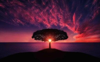 Et tre på en øy ved solnedgang