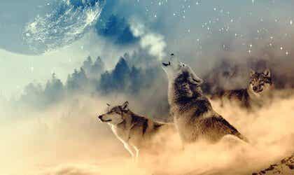 Ulvens medisin ifølge indianere: et gjensyn med vår styrke