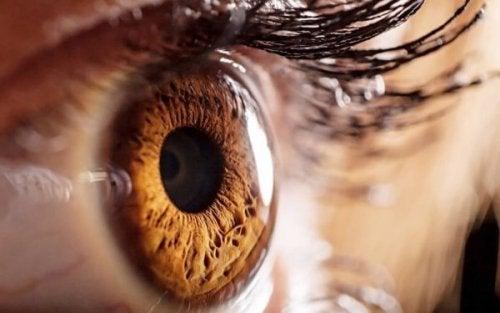 Nærbilde av et brunt øye