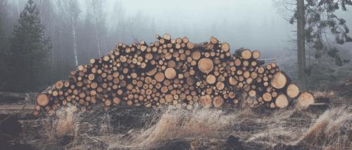 Stablede tømmerstokker er en av mønstrene som skaper kstrem frykt i personer som lider av trypofobi.