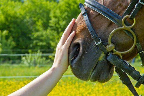 Hest og hånd