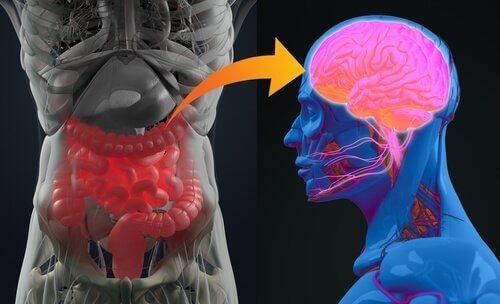 Det enteriske nervesystemet