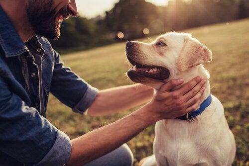 Hundehistorier som skapte historie