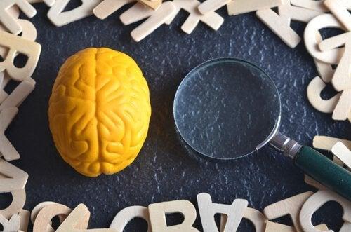 Eksperimentell psykologi: Hva er det?