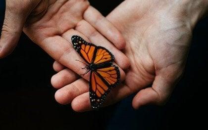 Hender med sommerfugl.