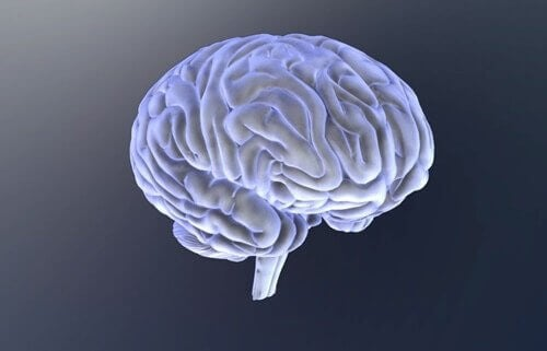 Hjernen.