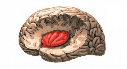 Insula sin posisjon i hjernen