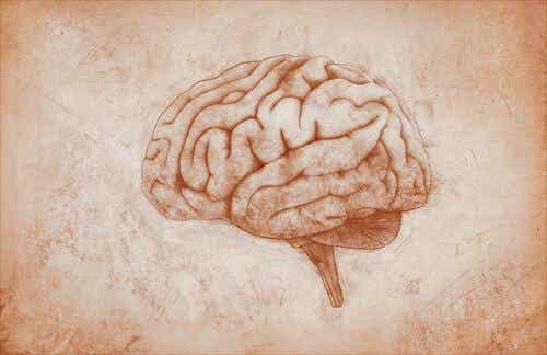 Den motoriske hjernebarken: Egenskaper og funksjoner