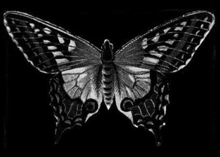 En svart sommerfugl