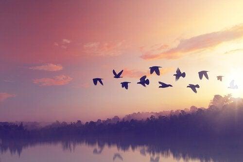Toh-fuglen