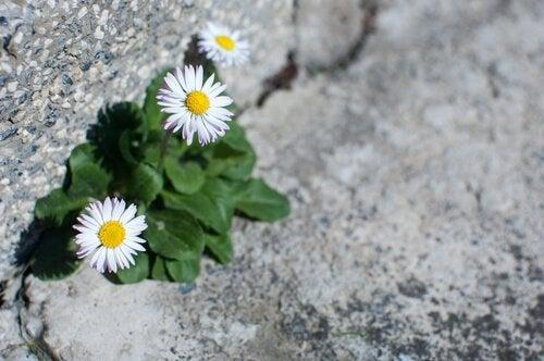 Blomster på veien som representerer den positive siden av motgang i livet