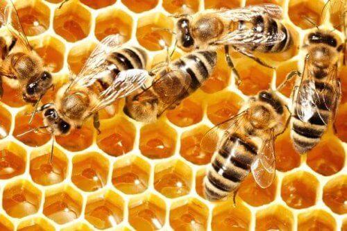 Samarbeid er bare en av mange leksjoner vi kan lære av bier