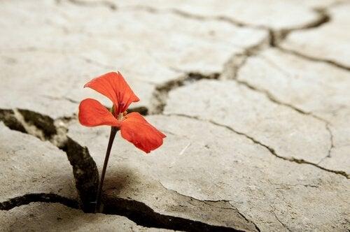 Blomst vokser fra sprekk i bakken