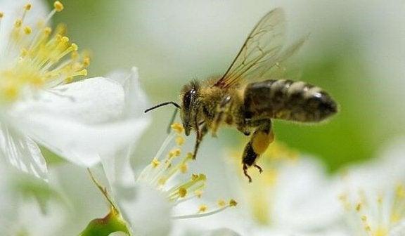 Fem leksjoner vi kan lære av bier