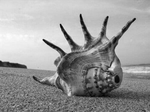 Et skjell på stranden