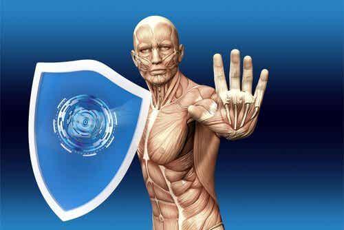 Hvordan fungerer menneskets immunsystem?