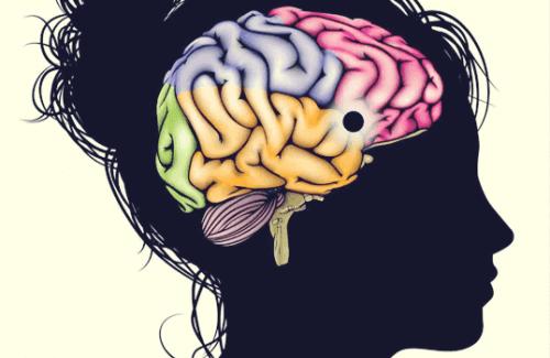 Nucleus accumbens: Et lærings- og nytelsessenter