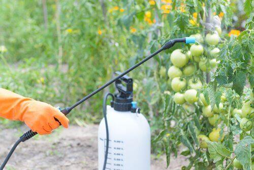 En person sprøyter plantevernmidler på frukt.
