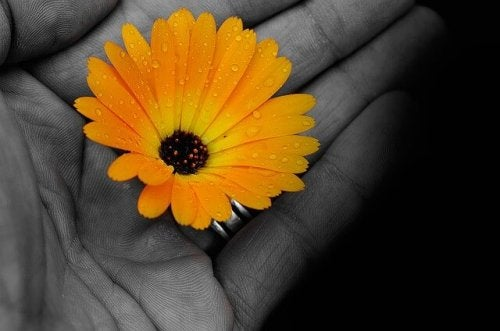 En gul blomst i noens hånd.