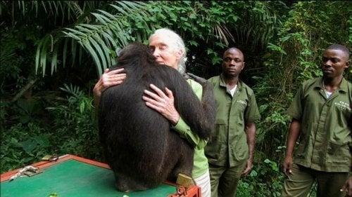Goodall lærer oss om mer enn bare sjimpanser