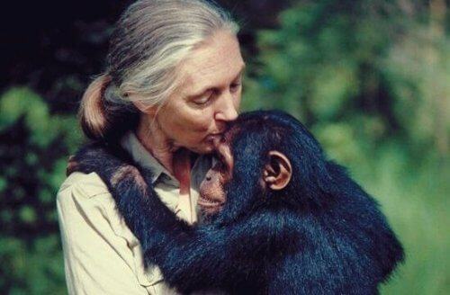 Fem Jane Goodall-sitater å reflektere over