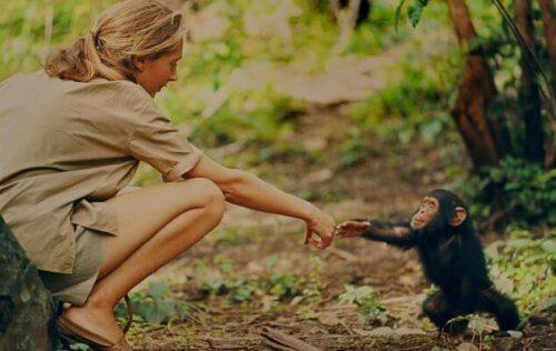 Jane Goodall og en primat
