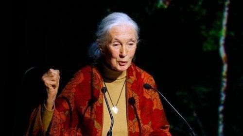 Noen Jane Goodall-sitater kommer fra hennes aktivistiske konferanser