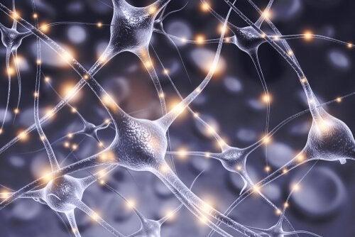 Konneksjonisme og nevroner.