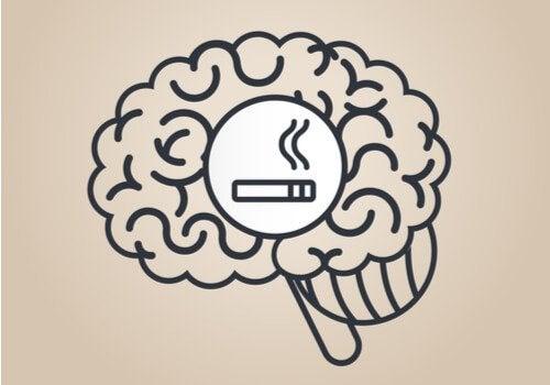 Hvordan påvirker nikotin hjernen vår?